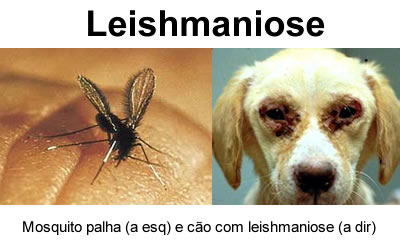 leishmaniose2